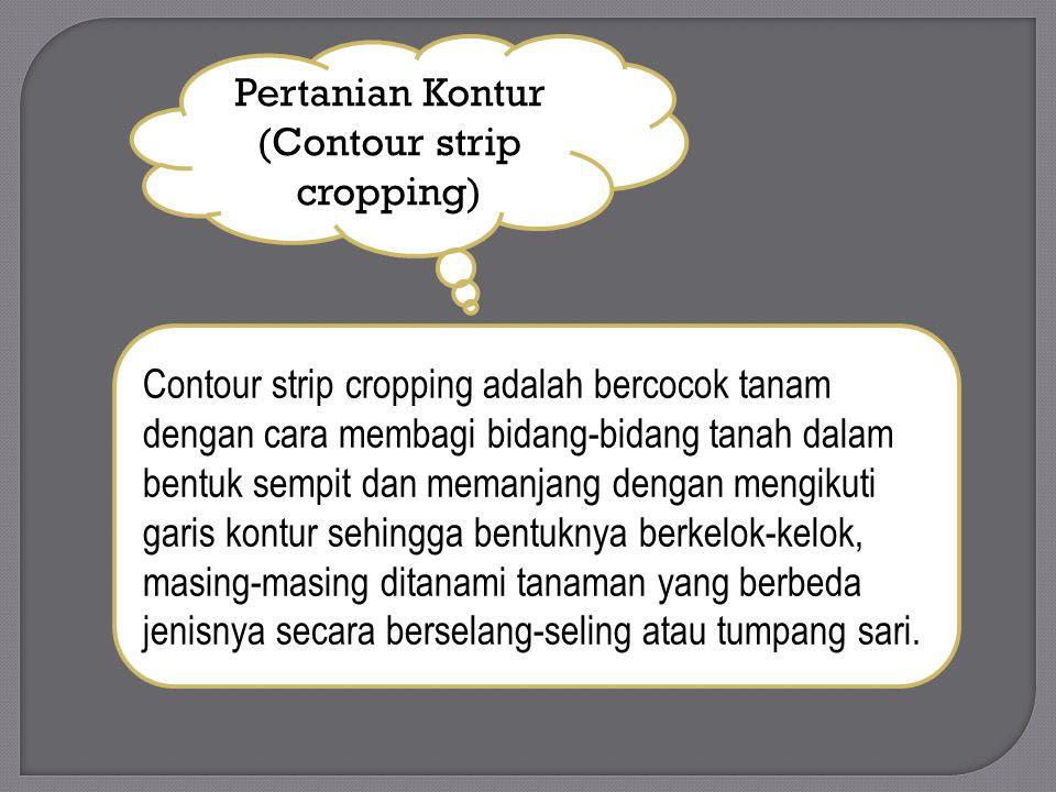 Pertanian Kontur (Contour strip cropping) Contour strip cropping adalah bercocok tanam dengan cara membagi bidang-bidang tanah dalam bentuk sempit dan