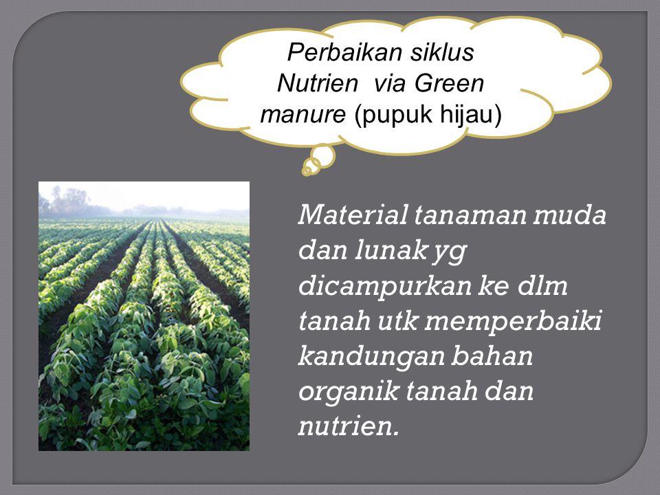 Material tanaman muda dan lunak yg dicampurkan ke dlm tanah utk memperbaiki kandungan bahan organik tanah dan nutrien. Perbaikan siklus Nutrien via Gr