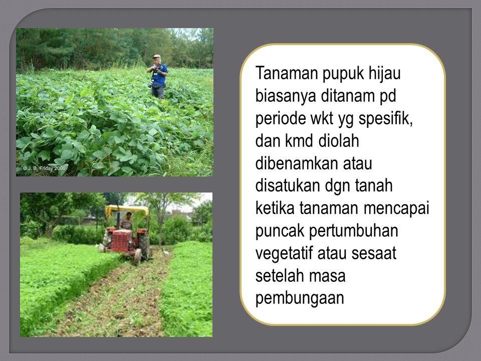 Tanaman pupuk hijau biasanya ditanam pd periode wkt yg spesifik, dan kmd diolah dibenamkan atau disatukan dgn tanah ketika tanaman mencapai puncak per