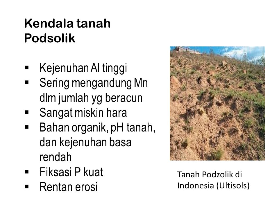 Kendala tanah Podsolik  Kejenuhan Al tinggi  Sering mengandung Mn dlm jumlah yg beracun  Sangat miskin hara  Bahan organik, pH tanah, dan kejenuhan basa rendah  Fiksasi P kuat  Rentan erosi Tanah Podzolik di Indonesia (Ultisols)