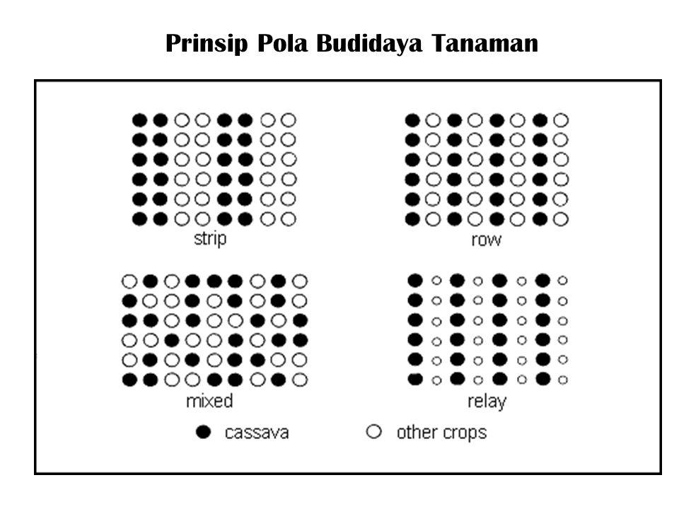Prinsip Pola Budidaya Tanaman