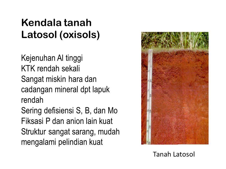 Kendala tanah Latosol (oxisols) Kejenuhan Al tinggi KTK rendah sekali Sangat miskin hara dan cadangan mineral dpt lapuk rendah Sering defisiensi S, B, dan Mo Fiksasi P dan anion lain kuat Struktur sangat sarang, mudah mengalami pelindian kuat Tanah Latosol