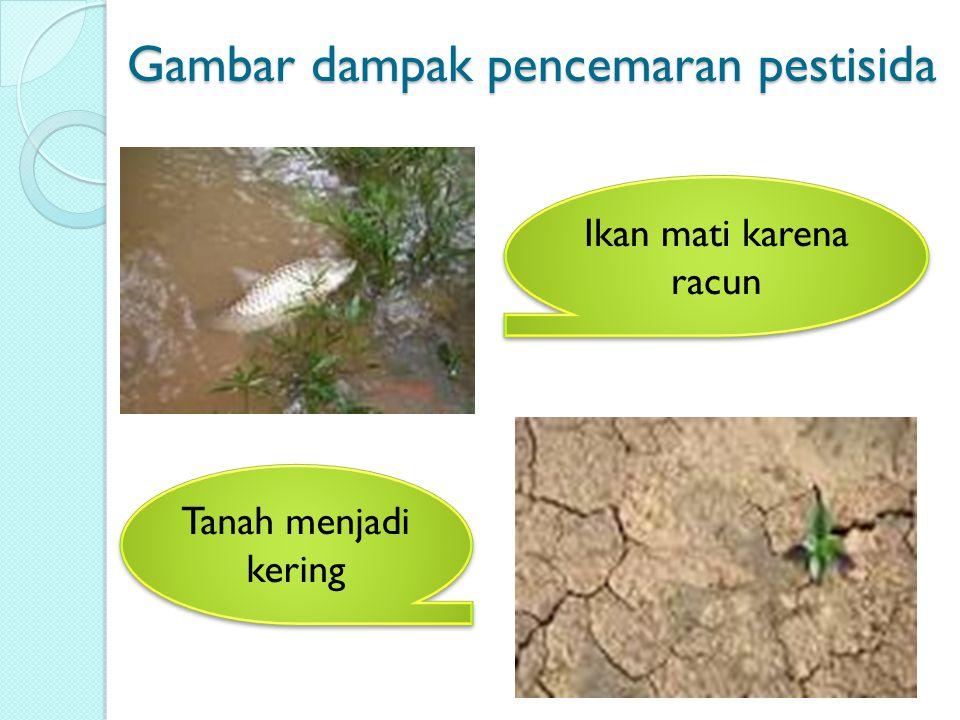 Gambar dampak pencemaran pestisida Ikan mati karena racun Tanah menjadi kering