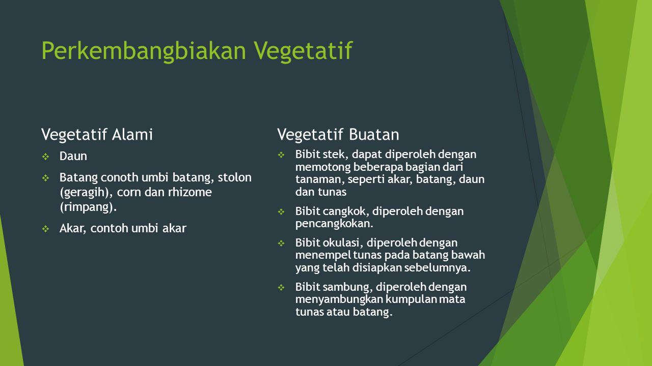 Perkembangbiakan Vegetatif Vegetatif Alami  Daun  Batang conoth umbi batang, stolon (geragih), corn dan rhizome (rimpang).  Akar, contoh umbi akar