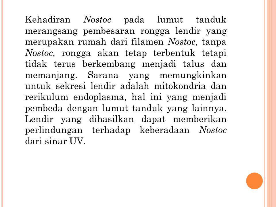 Kehadiran Nostoc pada lumut tanduk merangsang pembesaran rongga lendir yang merupakan rumah dari filamen Nostoc, tanpa Nostoc, rongga akan tetap terbe
