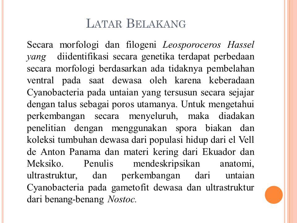 L ATAR B ELAKANG Secara morfologi dan filogeni Leosporoceros Hassel yang diidentifikasi secara genetika terdapat perbedaan secara morfologi berdasarka