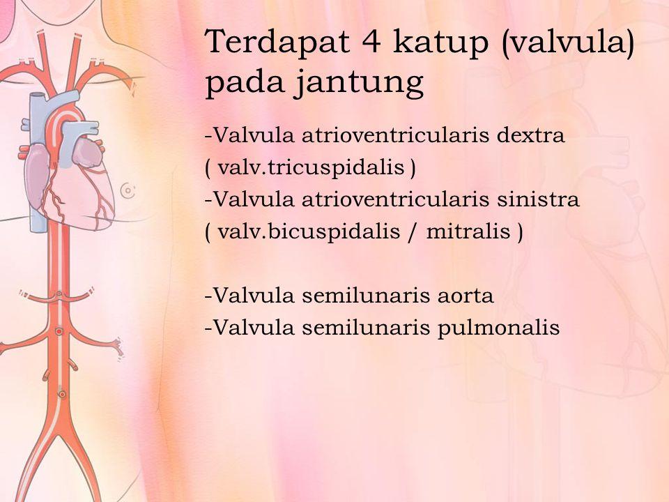 Terdapat 4 katup (valvula) pada jantung -Valvula atrioventricularis dextra ( valv.tricuspidalis ) -Valvula atrioventricularis sinistra ( valv.bicuspidalis / mitralis ) -Valvula semilunaris aorta -Valvula semilunaris pulmonalis