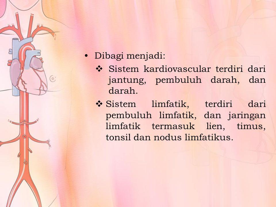 Dibagi menjadi:  Sistem kardiovascular terdiri dari jantung, pembuluh darah, dan darah.