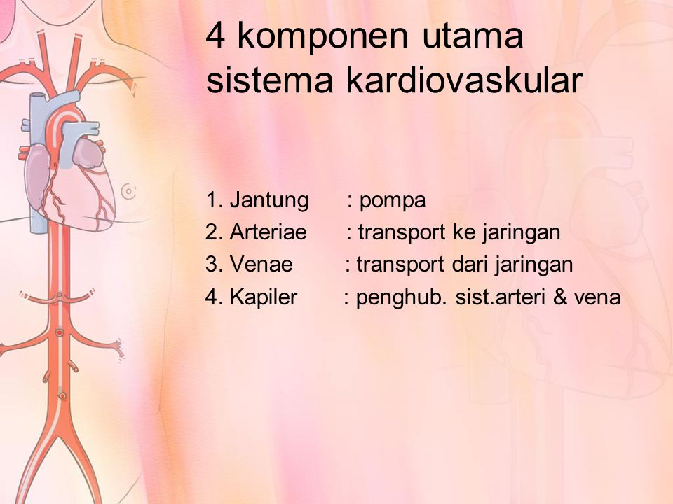 JANTUNG ( COR ) Terdiri dari 2 pompa terpisah: 1.Jantung kanan Memompa darah melalui paru 2.Jantung kiri Memompa darah melalui bagian tubuh yang lain