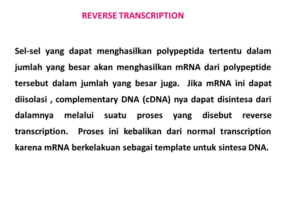 REVERSE TRANSCRIPTION Sel-sel yang dapat menghasilkan polypeptida tertentu dalam jumlah yang besar akan menghasilkan mRNA dari polypeptide tersebut da