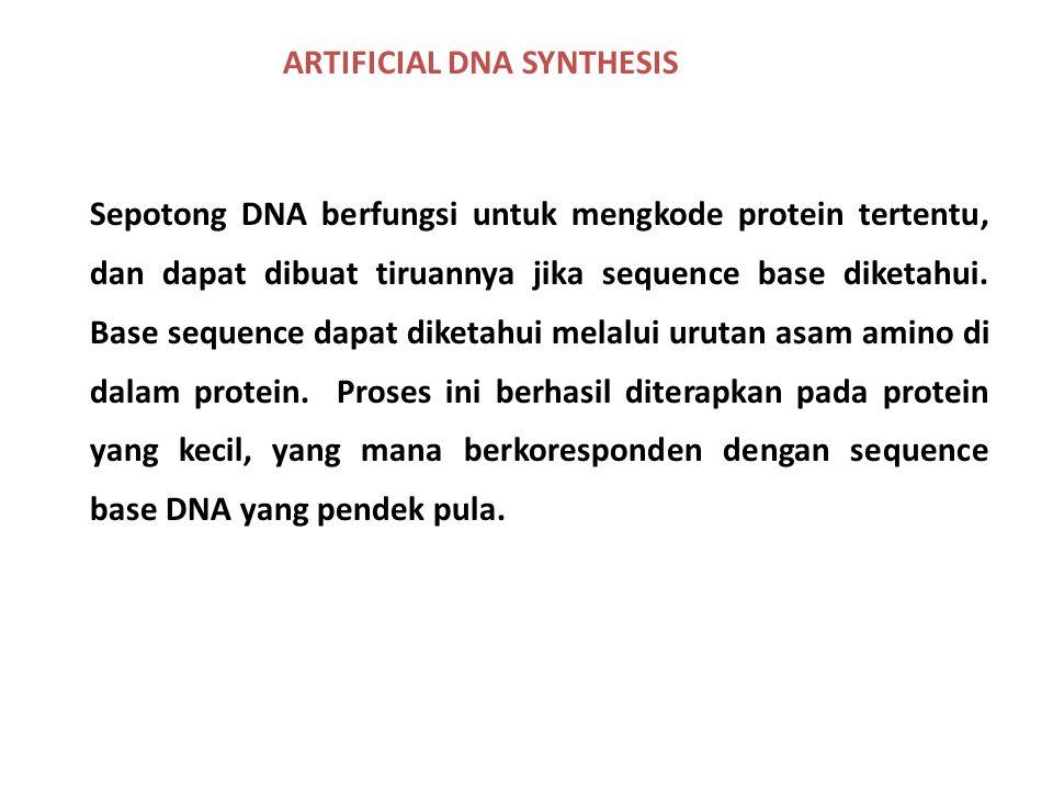 ARTIFICIAL DNA SYNTHESIS Sepotong DNA berfungsi untuk mengkode protein tertentu, dan dapat dibuat tiruannya jika sequence base diketahui. Base sequenc