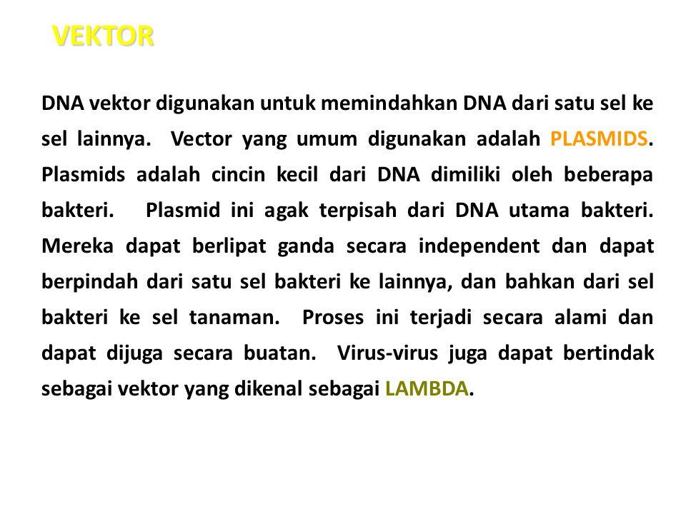 DNA vektor digunakan untuk memindahkan DNA dari satu sel ke sel lainnya. Vector yang umum digunakan adalah PLASMIDS. Plasmids adalah cincin kecil dari