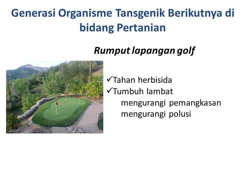 Rumput lapangan golf Tahan herbisida Tumbuh lambat mengurangi pemangkasan mengurangi polusi