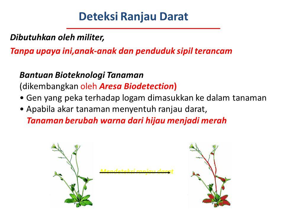 Deteksi Ranjau Darat Dibutuhkan oleh militer, Tanpa upaya ini,anak-anak dan penduduk sipil terancam Bantuan Bioteknologi Tanaman (dikembangkan oleh Ar