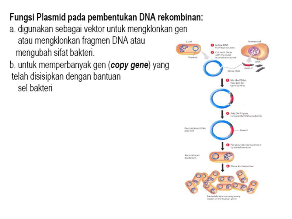 PROSES TRANSFORMASI GEN melibatkan beberapa tahap: INSERSIINTEGRASIEKSPRESI PEWARISAN DNA BARU TRANSFER DNA dari DONOR ke INANG : DNA VECTORS Metode insersi melibatkan: Vektor (bakteri atau virus) Transfer gen langsung (TGL) (first gene transfer)