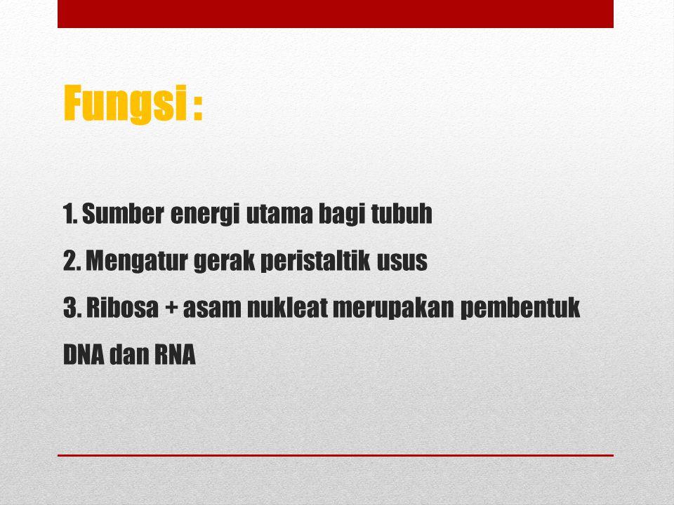 Fungsi : 1.Sumber energi utama bagi tubuh 2. Mengatur gerak peristaltik usus 3.
