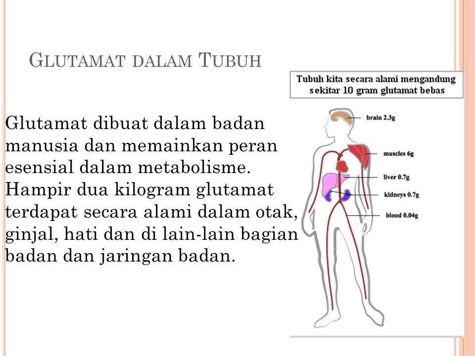 G LUTAMAT DALAM T UBUH Glutamat dibuat dalam badan manusia dan memainkan peran esensial dalam metabolisme. Hampir dua kilogram glutamat terdapat secar