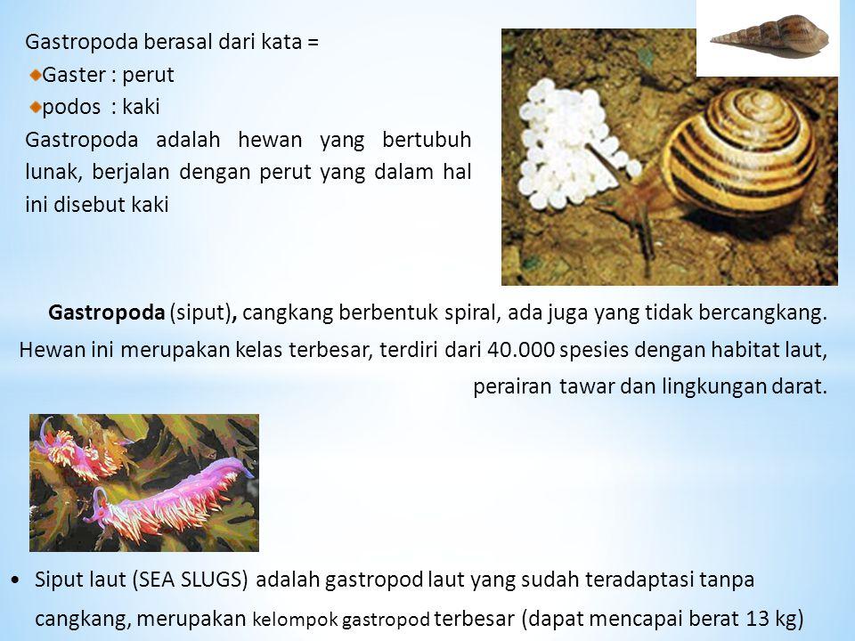 Gastropoda (siput), cangkang berbentuk spiral, ada juga yang tidak bercangkang. Hewan ini merupakan kelas terbesar, terdiri dari 40.000 spesies dengan