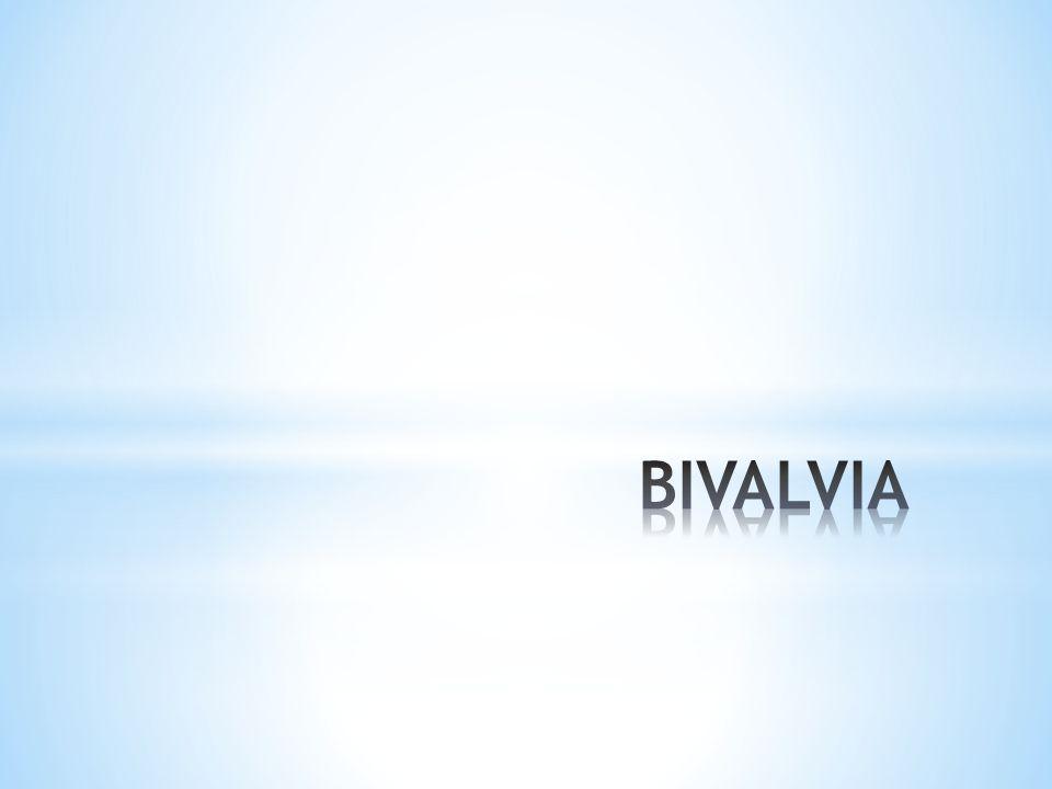 Bivalvia (Pelecypoda)  tubuh pipih secara lateral, tubuh tertutup cangkang berkeping dua menyatu di bagian dorsal dengan hinge ligament .