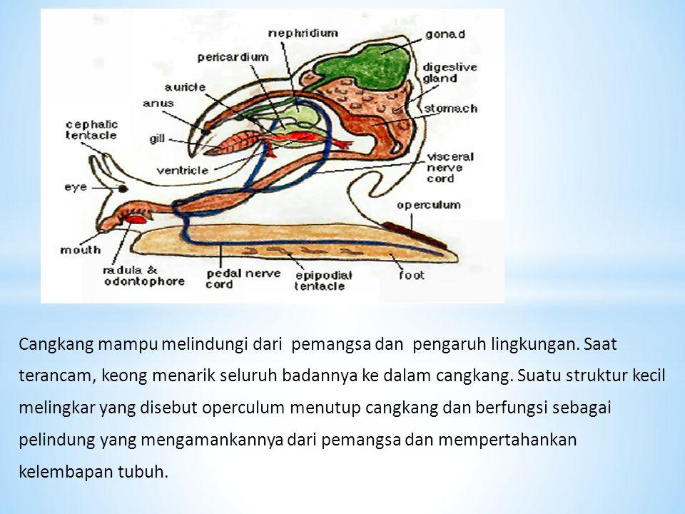 Cangkang mampu melindungi dari pemangsa dan pengaruh lingkungan. Saat terancam, keong menarik seluruh badannya ke dalam cangkang. Suatu struktur kecil