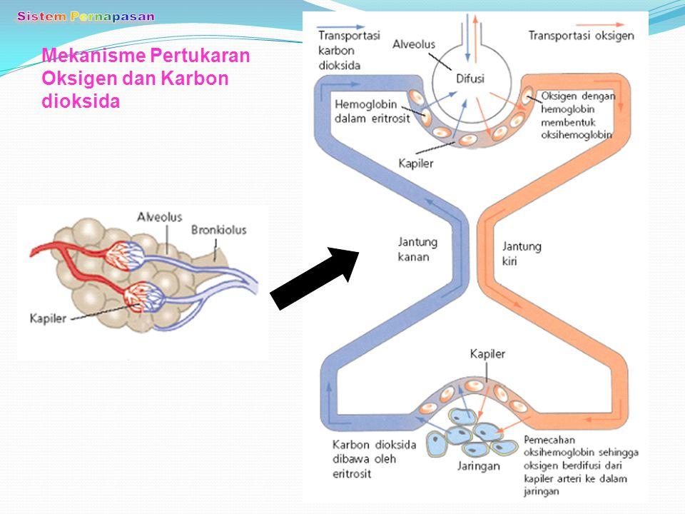Mekanisme Pertukaran Oksigen dan Karbon dioksida