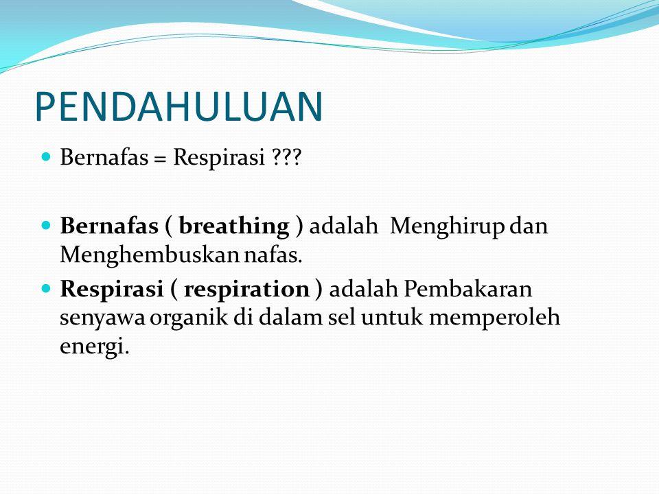 PENDAHULUAN Bernafas = Respirasi ??? Bernafas ( breathing ) adalah Menghirup dan Menghembuskan nafas. Respirasi ( respiration ) adalah Pembakaran seny