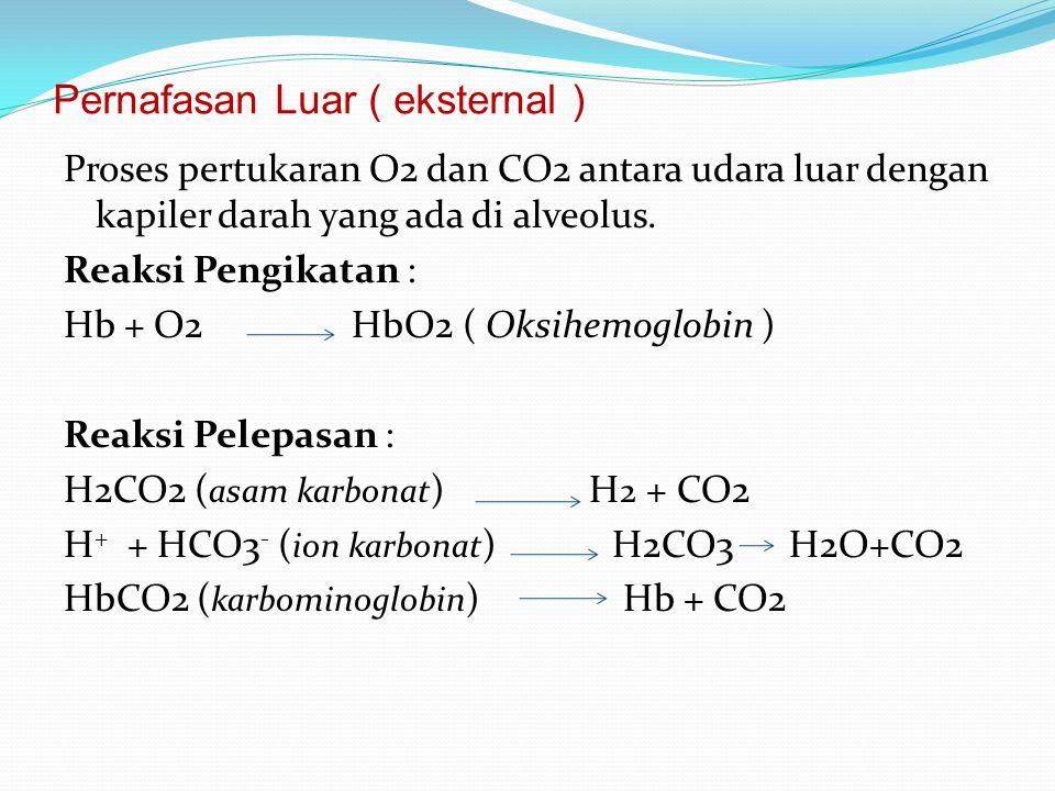 Pernafasan Luar ( eksternal ) Proses pertukaran O2 dan CO2 antara udara luar dengan kapiler darah yang ada di alveolus. Reaksi Pengikatan : Hb + O2 Hb