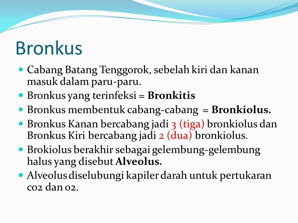 Bronkus Cabang Batang Tenggorok, sebelah kiri dan kanan masuk dalam paru-paru. Bronkus yang terinfeksi = Bronkitis Bronkus membentuk cabang-cabang = B