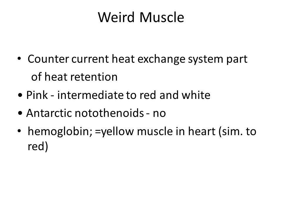 Weird Muscle Counter current heat exchange system part of heat retention Pink - intermediate to red and white Antarctic notothenoids - no hemoglobin;