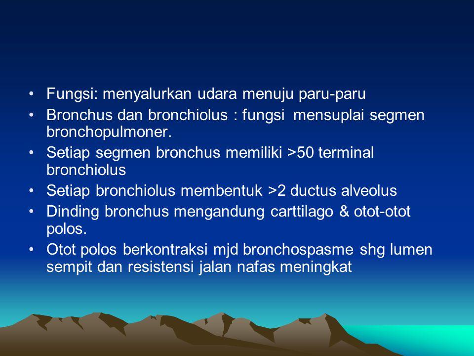 Fungsi: menyalurkan udara menuju paru-paru Bronchus dan bronchiolus : fungsi mensuplai segmen bronchopulmoner. Setiap segmen bronchus memiliki >50 ter