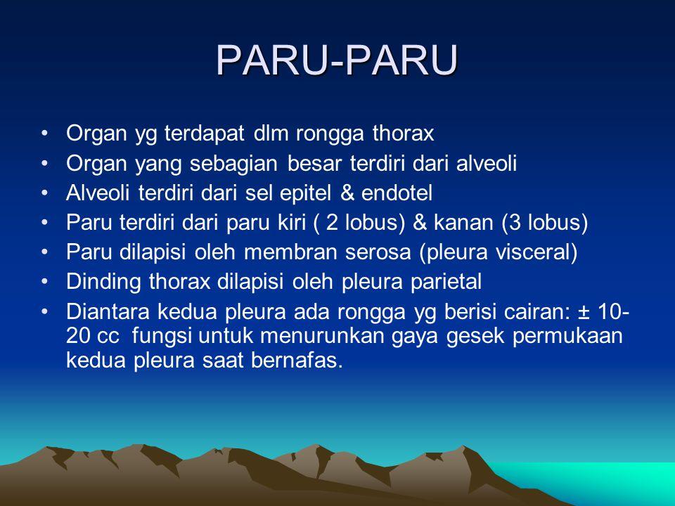 PARU-PARU Organ yg terdapat dlm rongga thorax Organ yang sebagian besar terdiri dari alveoli Alveoli terdiri dari sel epitel & endotel Paru terdiri da