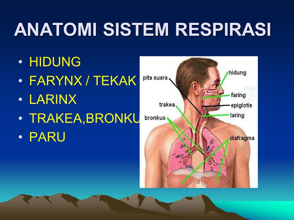Organ-organ pernafasan HIDUNG = NASAL = NASO FARING = TEKAK LARING = PANGKAL TENGOROK TRAKEA = BATANG TENGGOROK BRONKUS = CABANG TENGGOROK