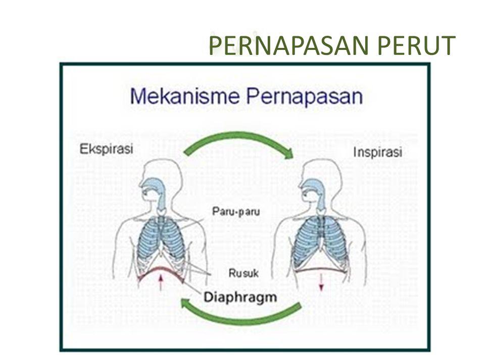 PERNAPASAN PERUT Inspirasi: otot diafragma kontraksi  diafragma datar  rongga dada dan paru-paru mengembang  tekanan udara rongga paru-paru ↓  uda