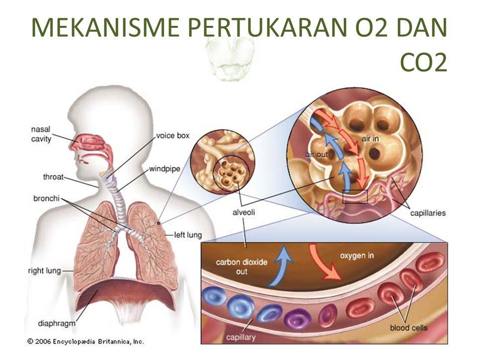 Kebutuhan normal oksigen per hari : 300 cc, kecuali dalam keadaan tertentu Difusi sederhana: gerakan molekul-molekul secara bebas melalui membran sel