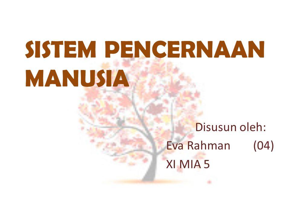 SISTEM PENCERNAAN MANUSIA Disusun oleh: Eva Rahman (04) XI MIA 5