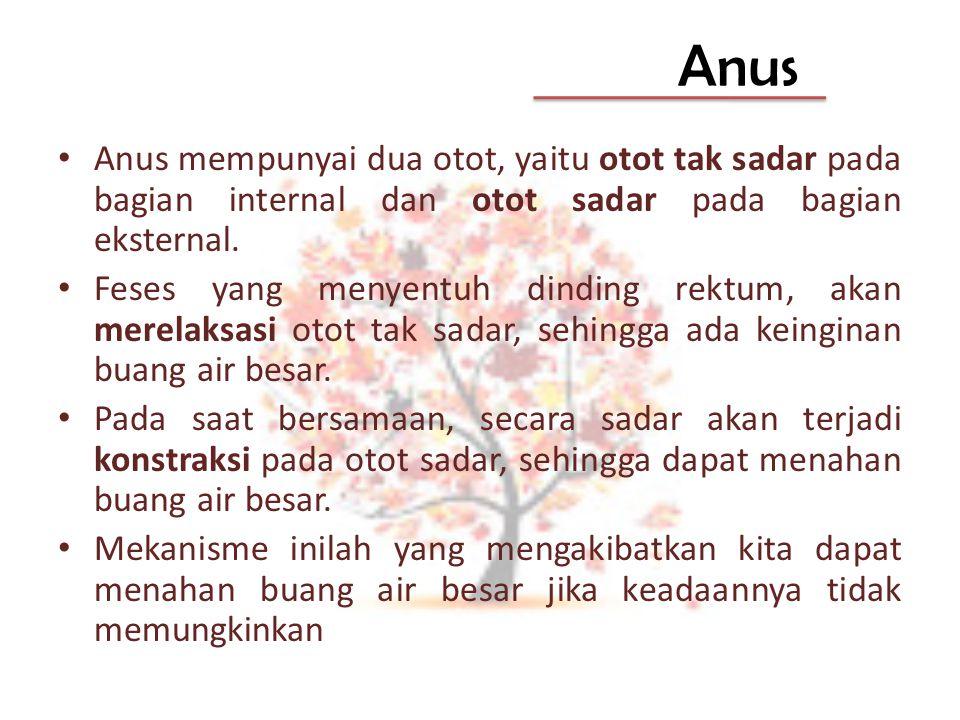 Anus Anus mempunyai dua otot, yaitu otot tak sadar pada bagian internal dan otot sadar pada bagian eksternal. Feses yang menyentuh dinding rektum, aka