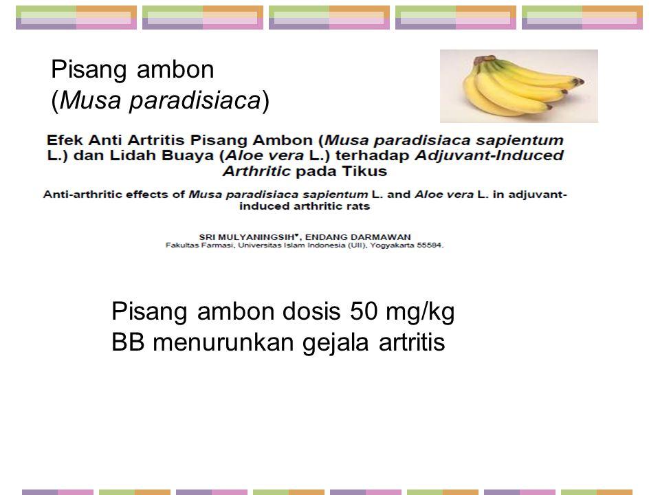 Pisang ambon dosis 50 mg/kg BB menurunkan gejala artritis Pisang ambon (Musa paradisiaca)