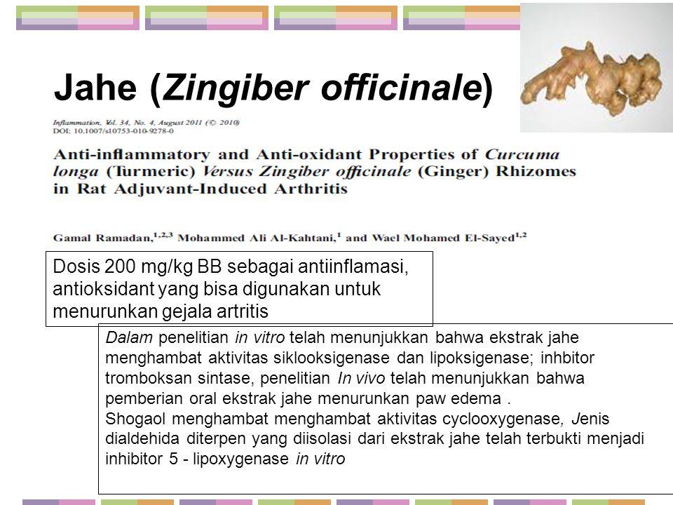 Jahe (Zingiber officinale) Dosis 200 mg/kg BB sebagai antiinflamasi, antioksidant yang bisa digunakan untuk menurunkan gejala artritis Dalam penelitia