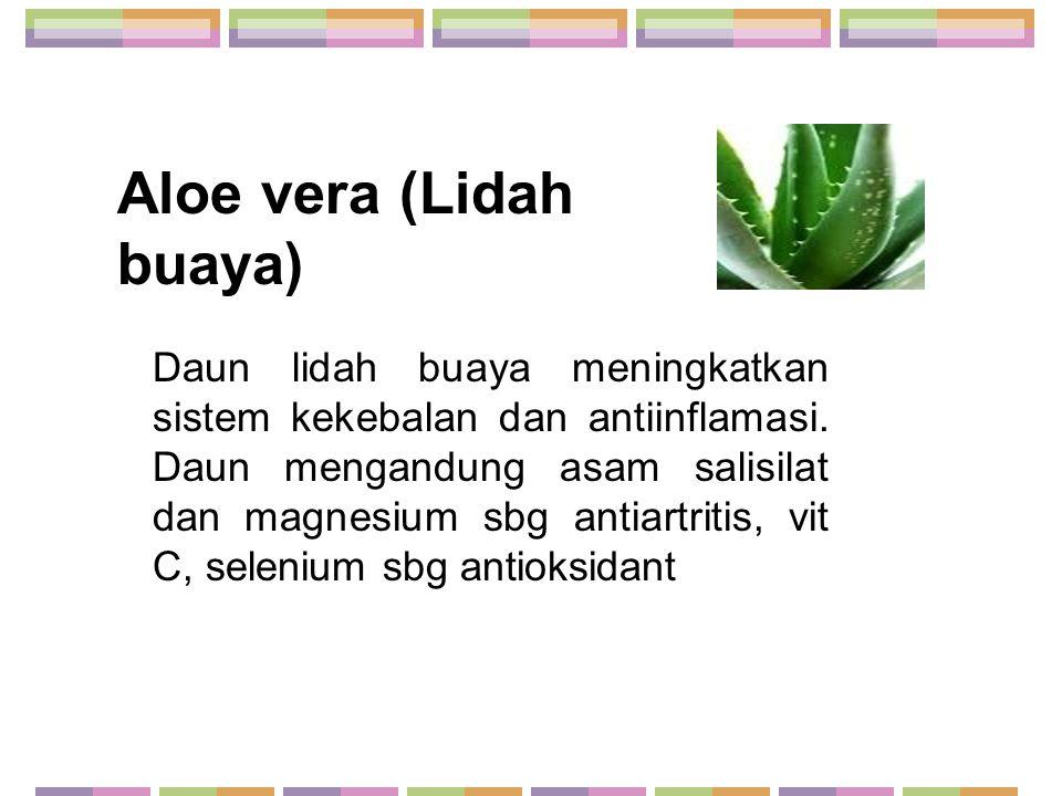 Aloe vera (Lidah buaya) Daun lidah buaya meningkatkan sistem kekebalan dan antiinflamasi. Daun mengandung asam salisilat dan magnesium sbg antiartriti