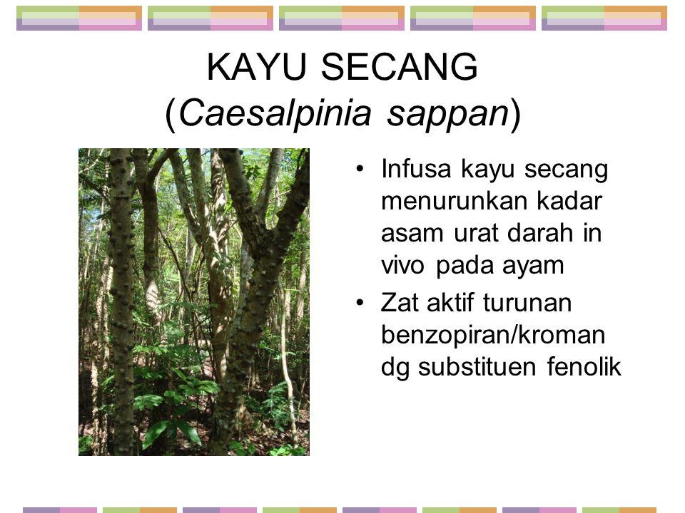 KAYU SECANG (Caesalpinia sappan) Infusa kayu secang menurunkan kadar asam urat darah in vivo pada ayam Zat aktif turunan benzopiran/kroman dg substitu