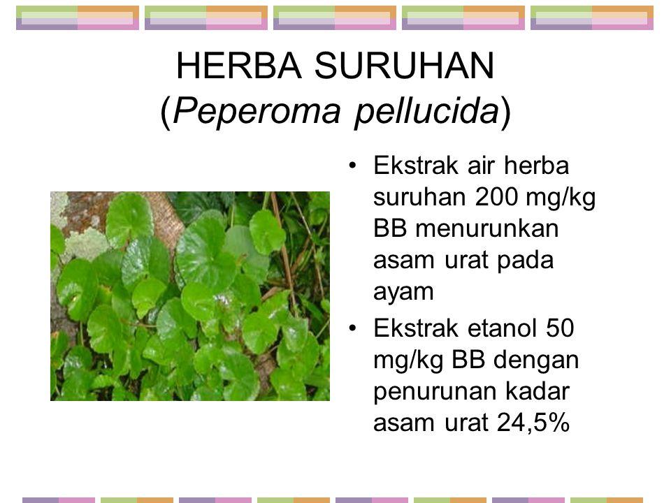 HERBA SURUHAN (Peperoma pellucida) Ekstrak air herba suruhan 200 mg/kg BB menurunkan asam urat pada ayam Ekstrak etanol 50 mg/kg BB dengan penurunan k