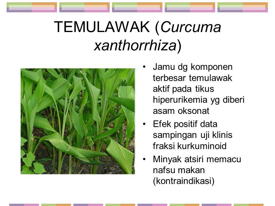 TEMULAWAK (Curcuma xanthorrhiza) Jamu dg komponen terbesar temulawak aktif pada tikus hiperurikemia yg diberi asam oksonat Efek positif data sampingan
