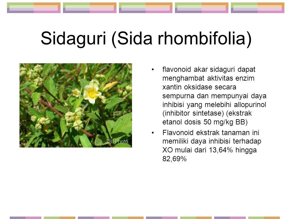 Sidaguri (Sida rhombifolia) flavonoid akar sidaguri dapat menghambat aktivitas enzim xantin oksidase secara sempurna dan mempunyai daya inhibisi yang