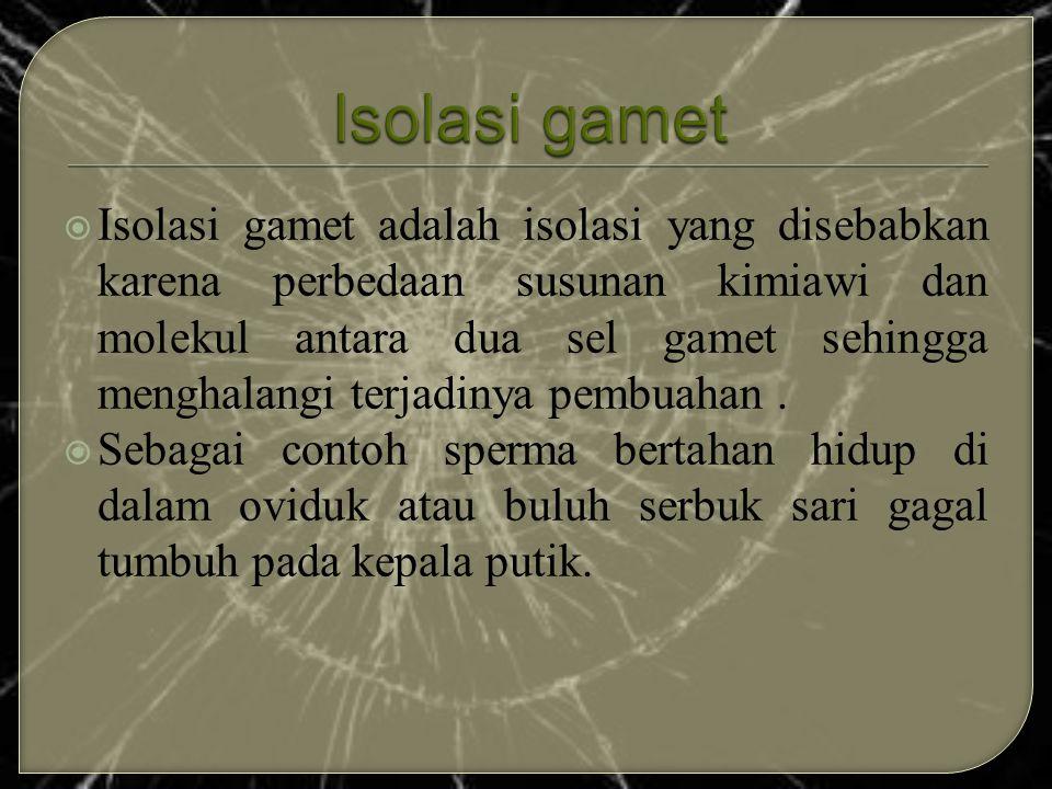  Isolasi gamet adalah isolasi yang disebabkan karena perbedaan susunan kimiawi dan molekul antara dua sel gamet sehingga menghalangi terjadinya pembu