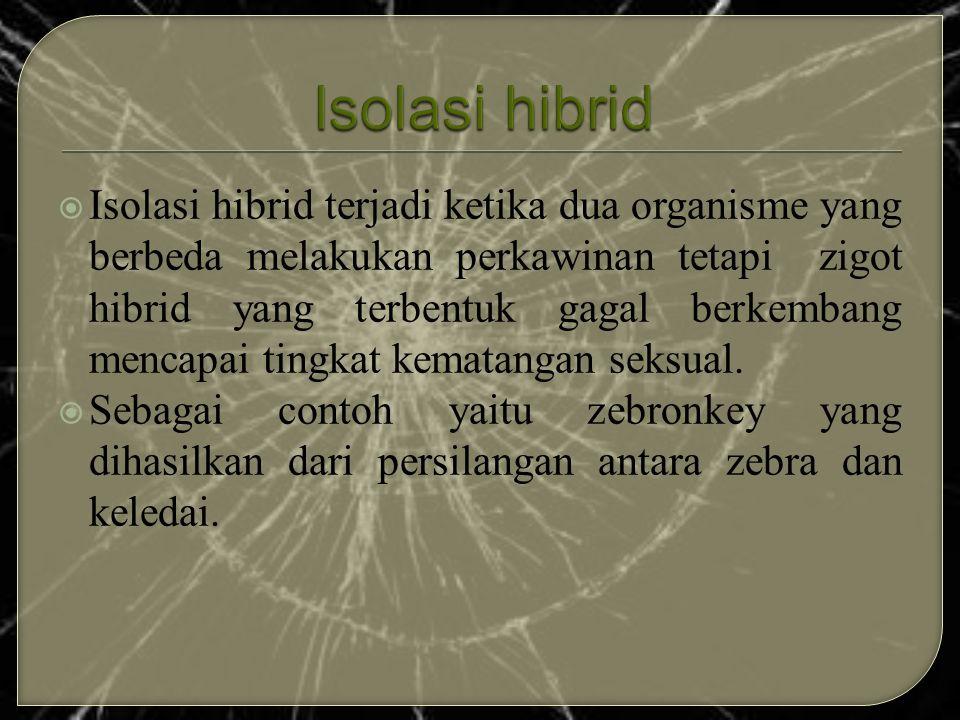  Isolasi hibrid terjadi ketika dua organisme yang berbeda melakukan perkawinan tetapi zigot hibrid yang terbentuk gagal berkembang mencapai tingkat k