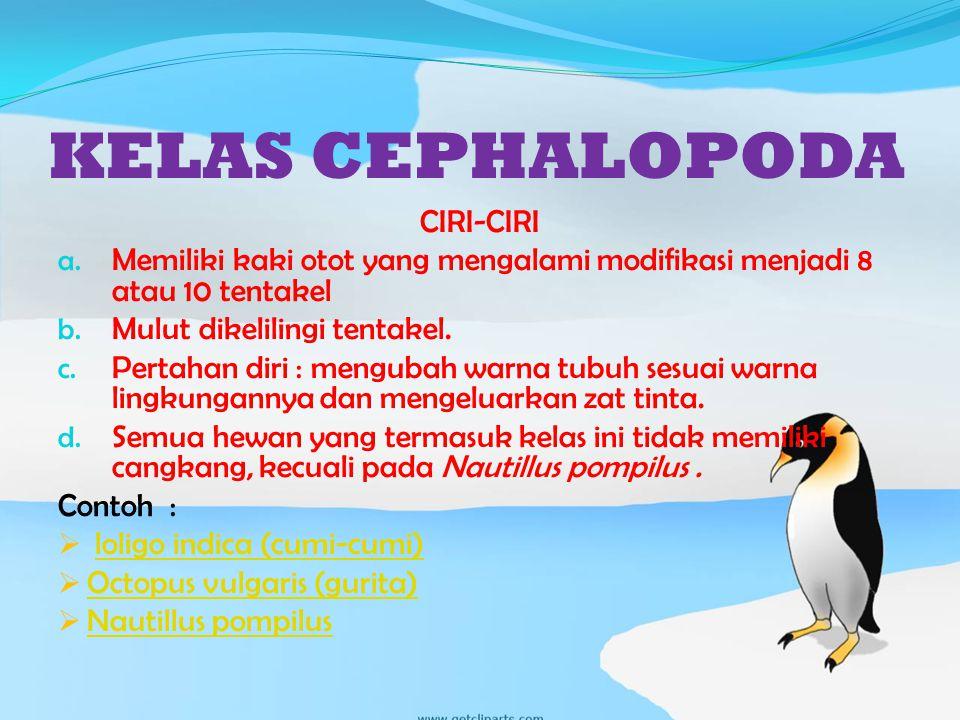KELAS CEPHALOPODA CIRI-CIRI a.