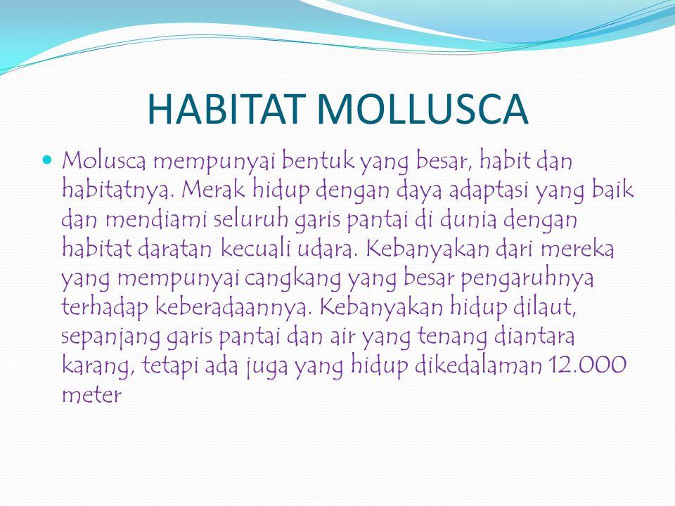 HABITAT MOLLUSCA Molusca mempunyai bentuk yang besar, habit dan habitatnya.