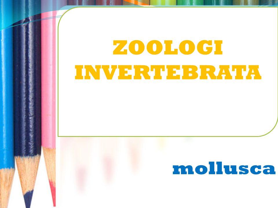 mollusca ZOOLOGI INVERTEBRATA