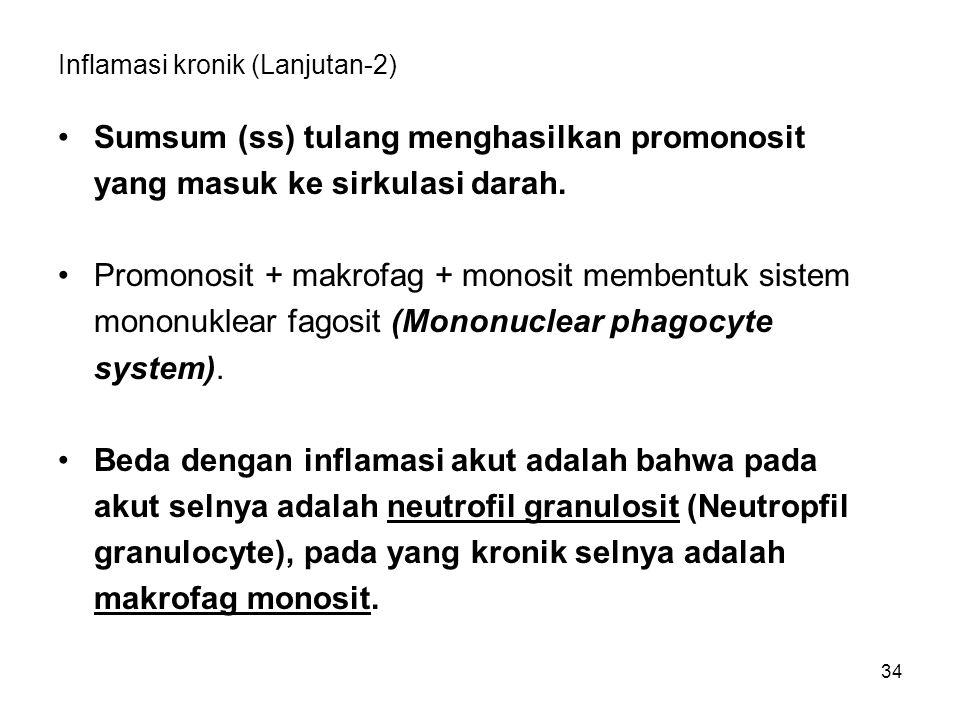 34 Inflamasi kronik (Lanjutan-2) Sumsum (ss) tulang menghasilkan promonosit yang masuk ke sirkulasi darah. Promonosit + makrofag + monosit membentuk s