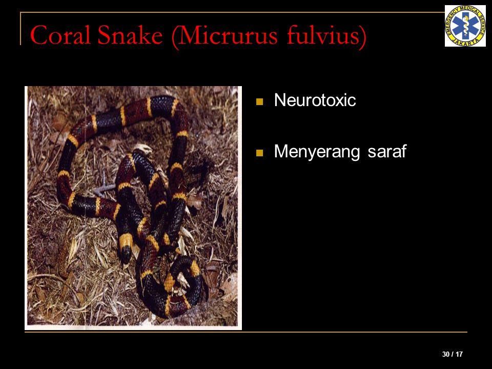 30 / 17 Coral Snake (Micrurus fulvius) Neurotoxic Menyerang saraf